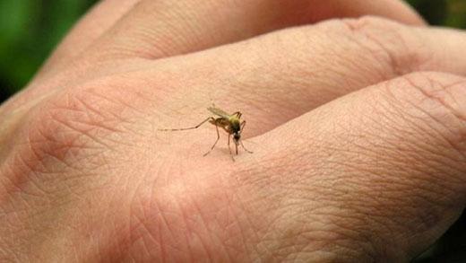 Registrado na zona sul o primeiro caso de dengue do ano em Ilha Solteira
